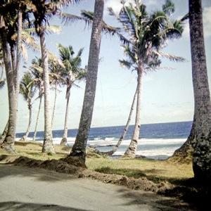 More random palm trees.